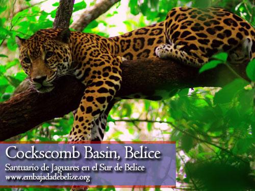 Reserva de Jaguares en el Sur de Belice