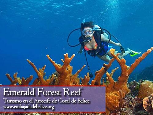 Emerald Forest Reef, turismo en Belice