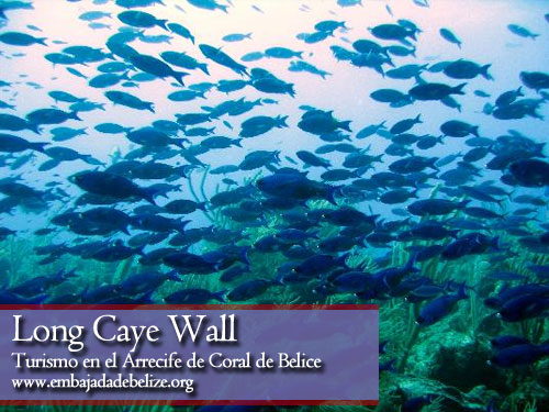 Long Caye Wall, Belize