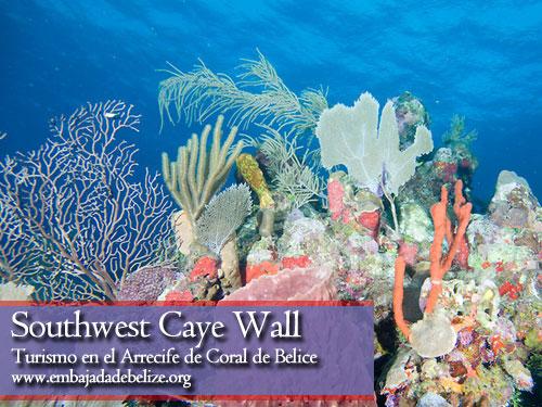 Southwest Caye Wall, Belice